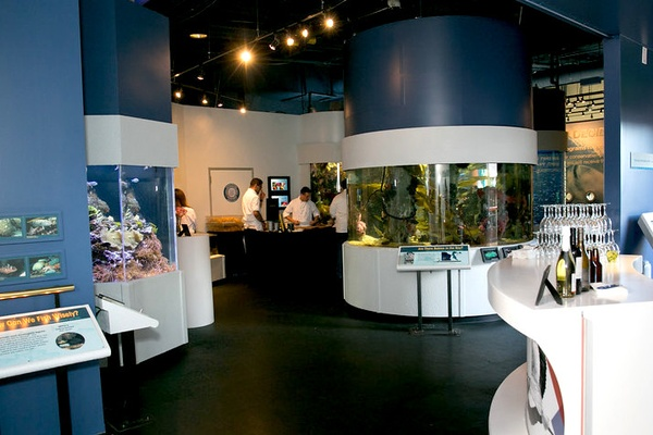 Photo of SF event space venue Aquarium of the Bay's Full Venue